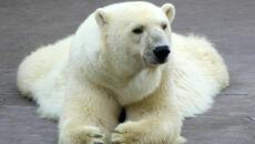 Niedźwiedź zaatakował brytyjskich turystów. Jeden nie żyje, czterech jest rannych