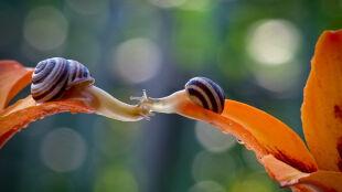 Z życia ślimaków. To są zdjęcia, które urzekają internautów