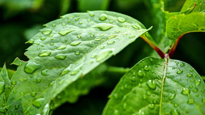 Prognoza pogody na dziś: <br />zimna Zośka z deszczem, lokalnie burze