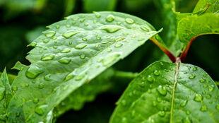 Prognoza pogody na dziś: możliwy deszcz, lokalne burze, do 24 stopni