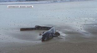 Woda wyrzuciła na plażę przerażającą rybę
